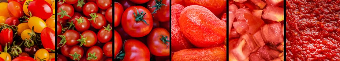 foto selezionatrici pomodoro tomato sorting machine