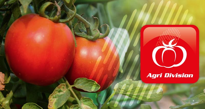macchine raccolta pomodori - tomato harvester