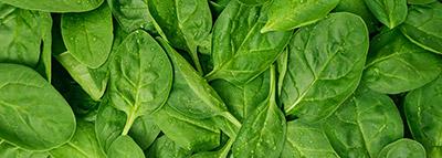 selezionatrici ottiche baby spinaci