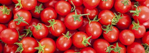 pomodorini selezionatrici pomodoro tomato sorting machine