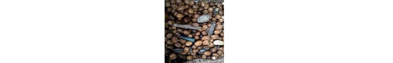 walnut sorting machine - selezionatrici ottiche noci