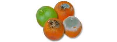 selezionatrici ottiche - agrumi orange sorting machine difetti