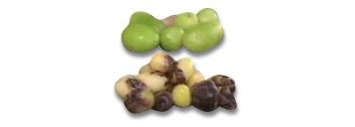 selezionatrici ottiche patate potato sorting machine difetti