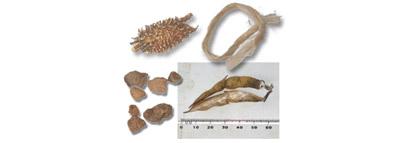 selezionatrici ottiche per Legumi difetti lenticchie