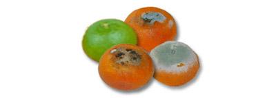 selezionatrici ottiche - agrumi orange sorting machine difettati