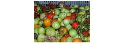 selezionatrici pomodoro difetti tomato sorting machine