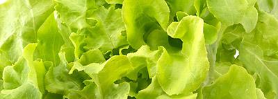 selezionatrici ottiche insalata lattuga