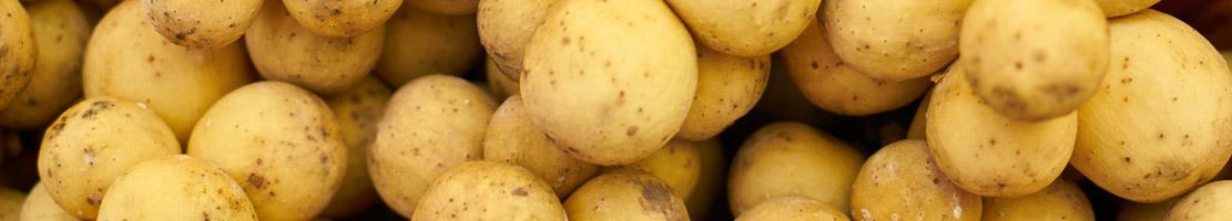 selezionatrici ottiche patate potato sorting machine