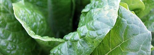 selezionatrici ottiche spinaci