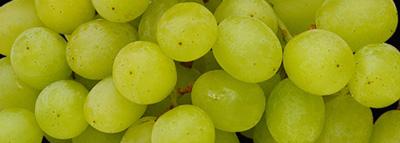 selezionatrici ottiche uva bianca - grape sorting machine