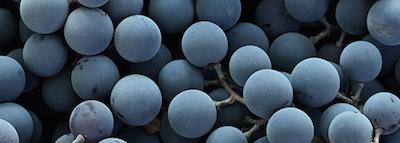 selezionatrici ottiche uva - grape sorting machine